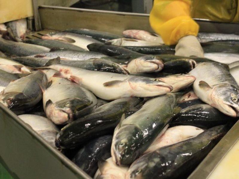Рыбный цех
