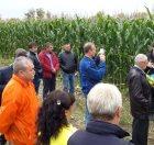 День поля кукурузы в Московской области