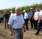 День поля кукурузы в КБР